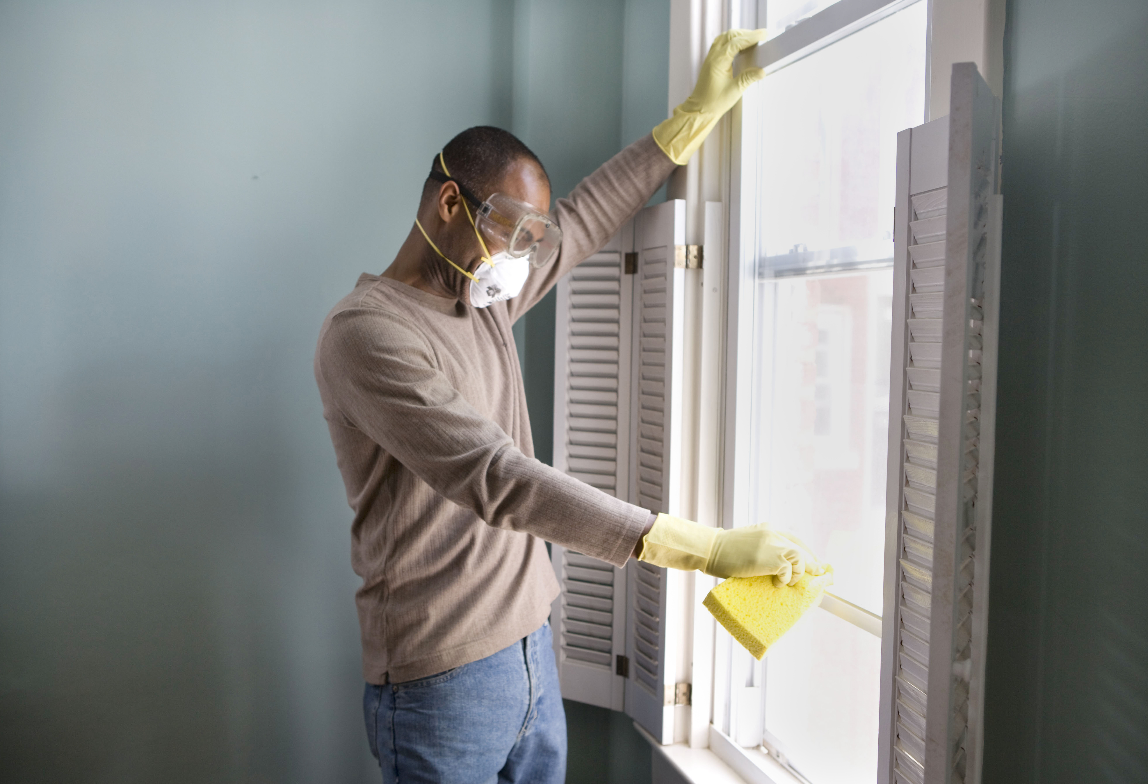 How to Find an Effective Mold Removal Service